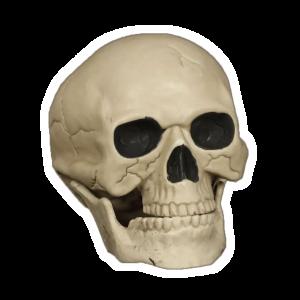 Kranium - webshop - shop