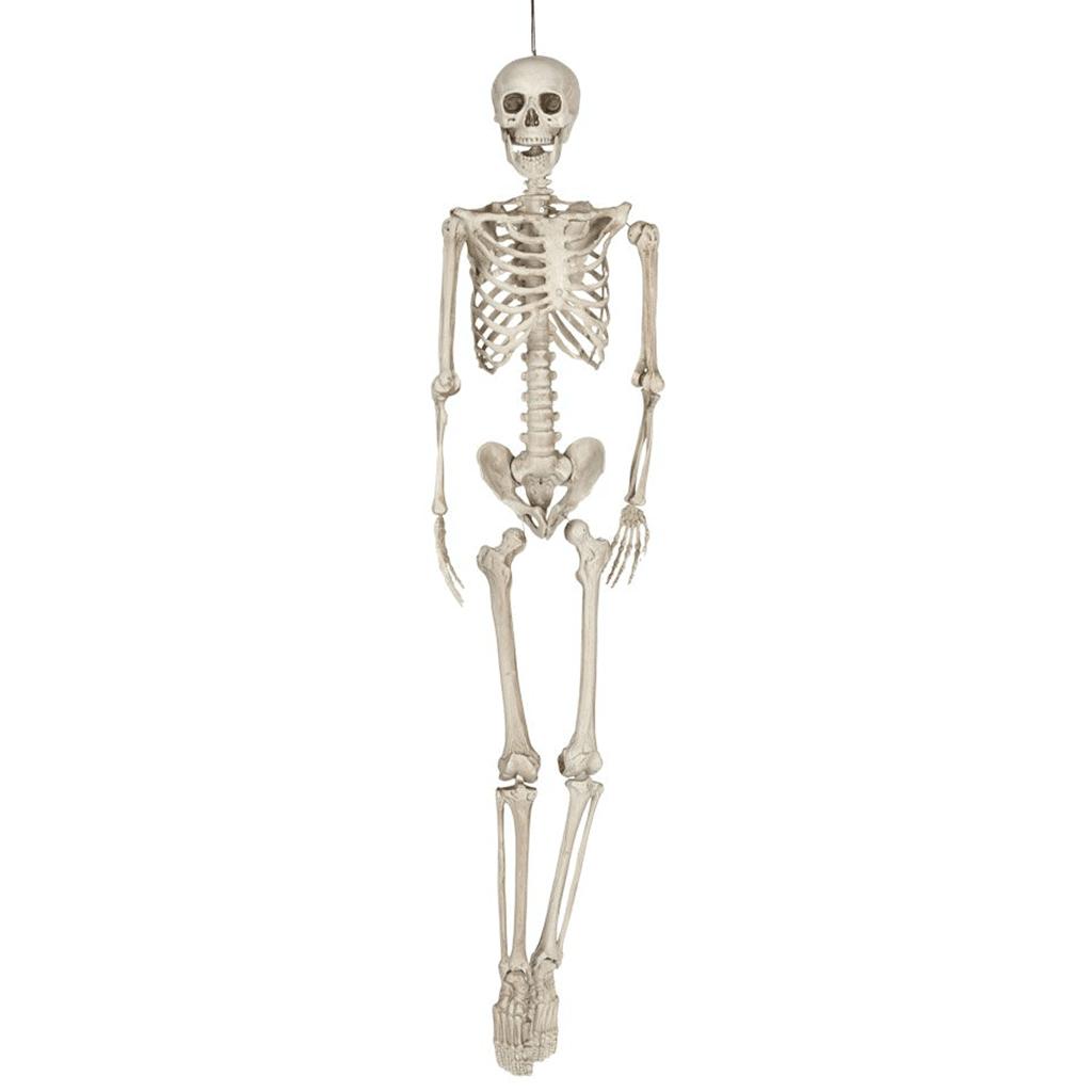 Skelet - shop - webshop